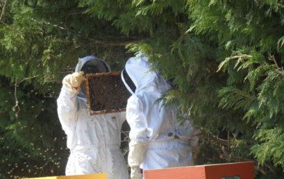 Installation d'essaims d'abeilles au lycée La Ricarde
